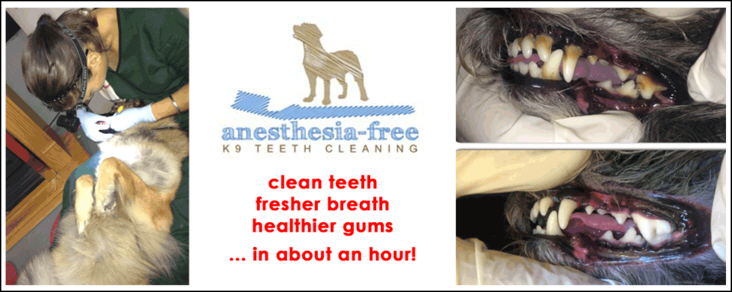 K9 dental cleaning